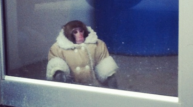 Shearling Coat - Wearing Monkey