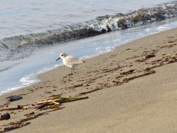 Iona Beach - 12