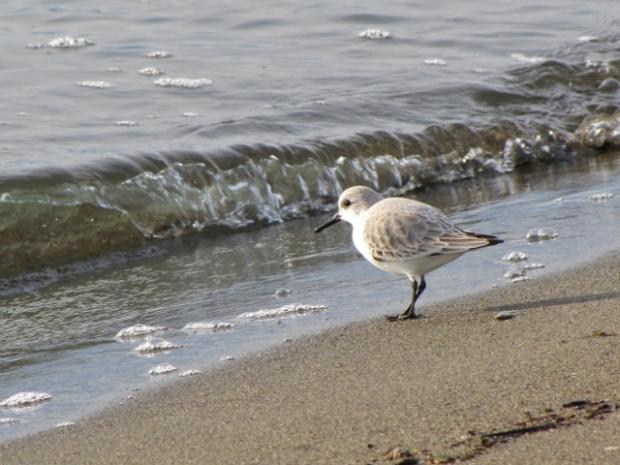 Iona Beach - 13