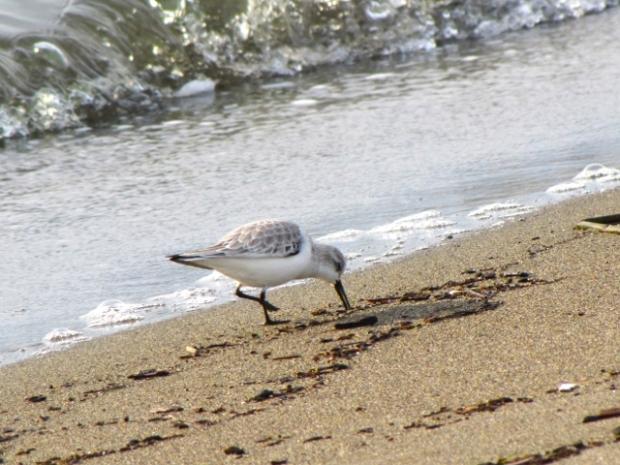 Iona Beach - 14