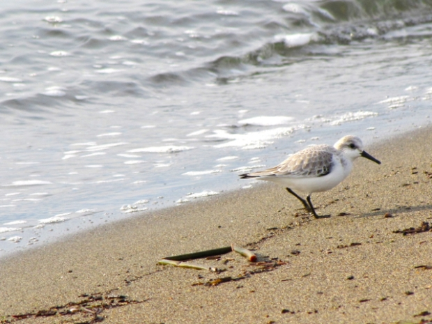 Iona Beach - 15