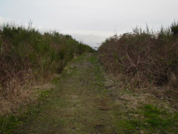 Iona Beach - 19