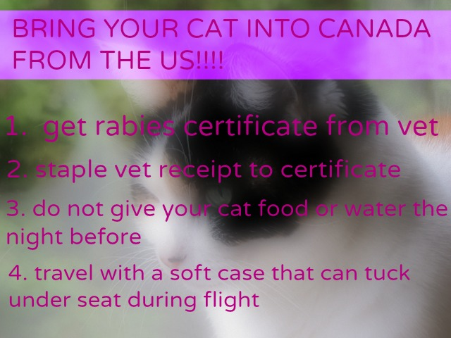 Bringing A Cat Into The Us From Canada