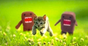Running Kitty Domo Kun