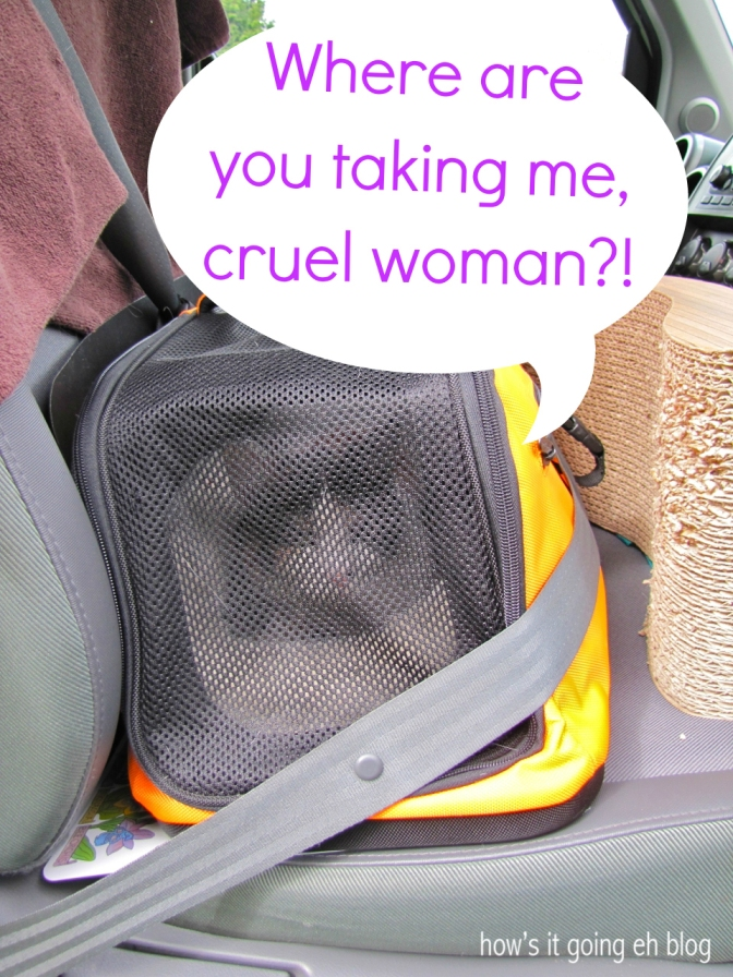 Driving with Cat - 2