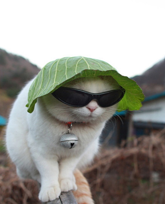 Keep Cat Cool