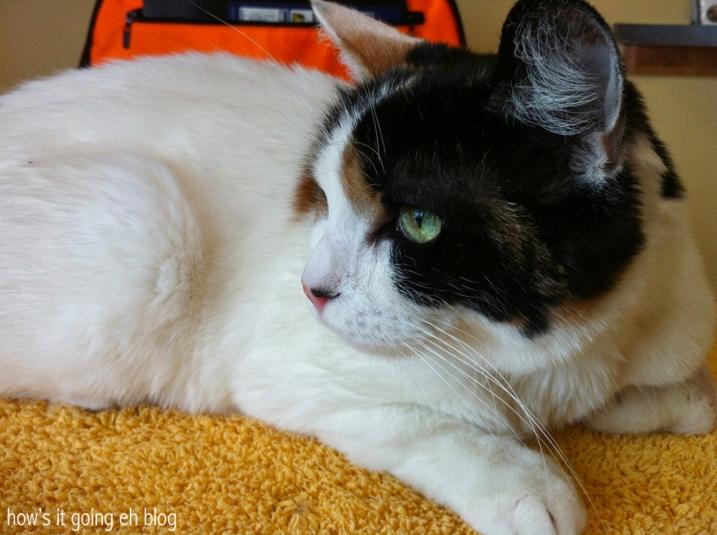 Kitty Mama Drama - 3
