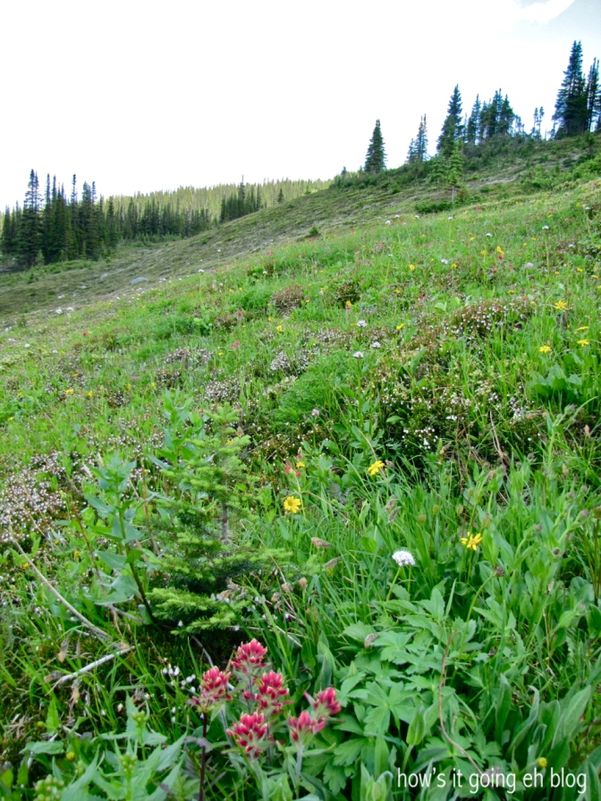 Edith Cavell Meadow - 19