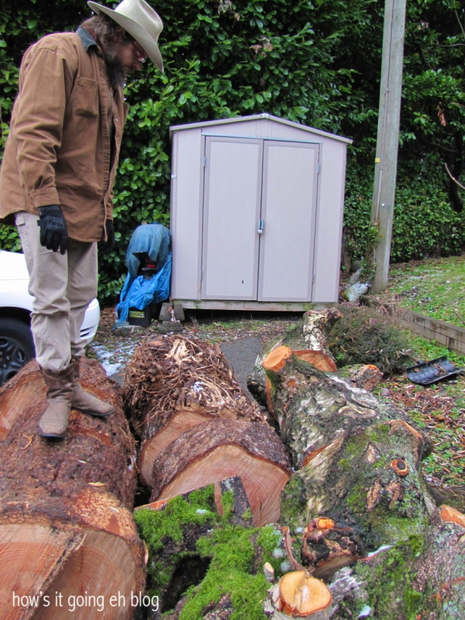 Firewood - 02