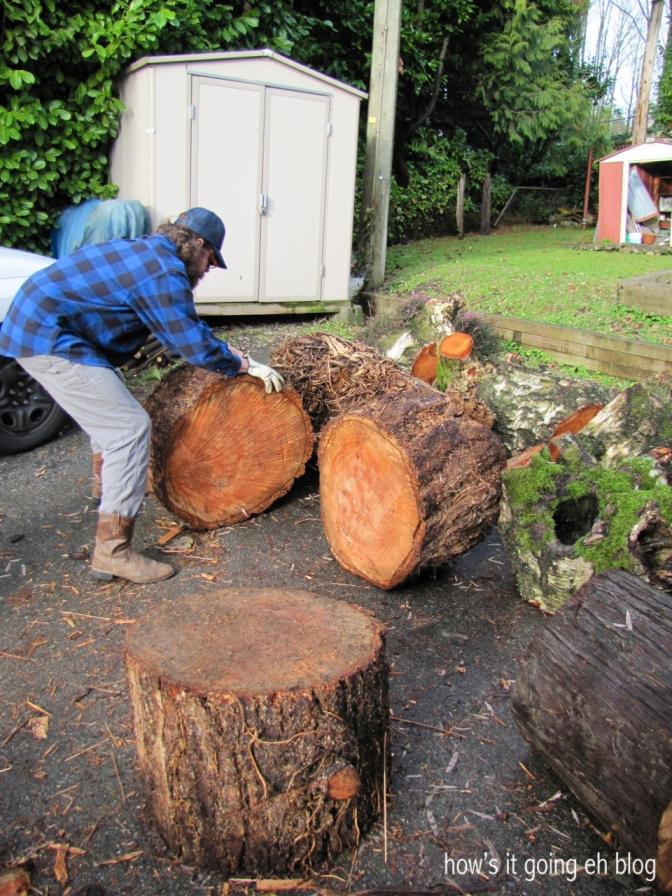 Firewood - 04