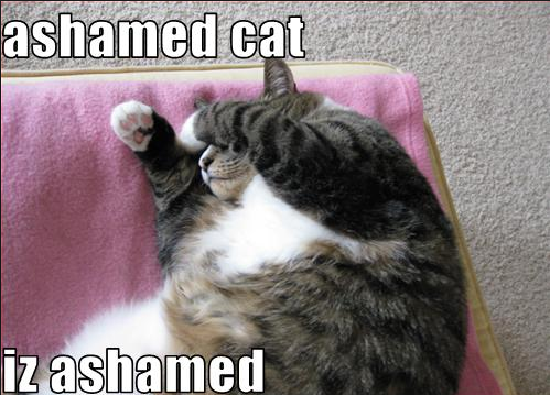 Ashamed Cat